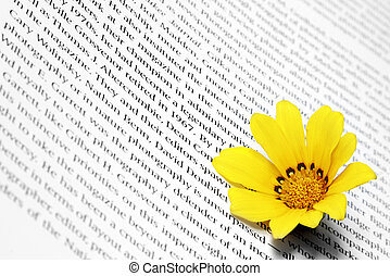 Flower on Book - Yellow daisy flower on white page with text