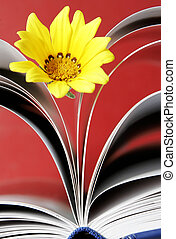 Flower and Book - Still life with yellow flower and book...