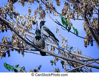 Birds - Two birds on a tree