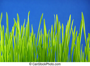 green grass straws - Perspective shot of green grass straws...
