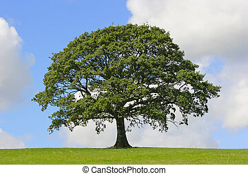 Dąb, drzewo, Symbol, Siła