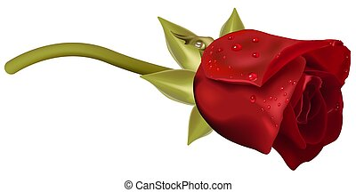 Red Rose with Raindrops - High detailed and coloured...