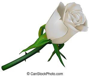 Wedding Rose White
