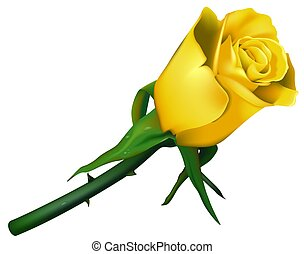 Wedding Rose Yellow - High detailed and coloured...