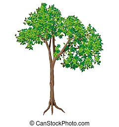 Deciduous Tree - High detailed and coloured illustration