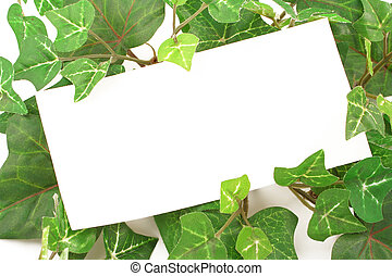 ivy notes - blank card on ivy plant background or border