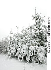 neve, coperto, albero