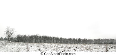 Snow tree line panorama - Snow scene panorama of a forest...