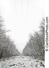 Telephone lines in the snow