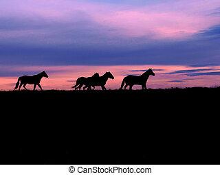 Western Sky - Horses, run free at sunset