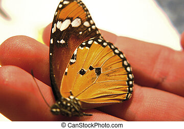 Monarch in Hand