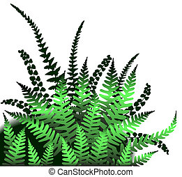 Ferns - Illustrated design element of fern leaves