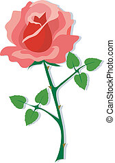 Red Rose - A single red rose on a white background