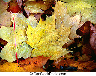 the letters from autumn - fallen autumn leaves on the ground