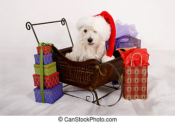 Santa Dog - West Highland Terrier with red Santa hat on...