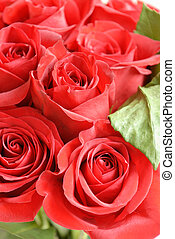 Roses - a beautiful cluster of red roses
