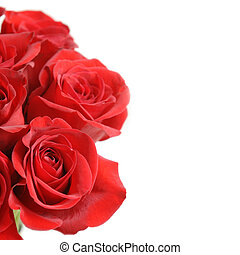 Red Roses - Beautiful red roses on a white background with...