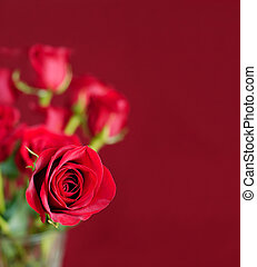 One Perfect Rose - A vase of beautiful red roses on a red...