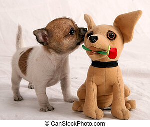 Do I know you - Chihuahua puppy sniffing a Chihuahua stuffed...
