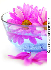 Pink flowers close up floating in water