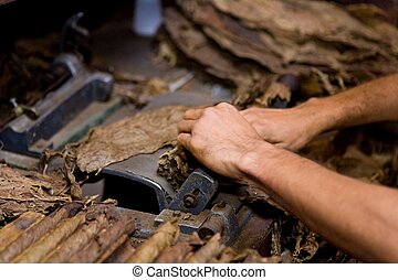tobacco worker - hands handling tobacco leaves