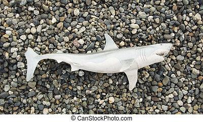 Toy Shark On Beach