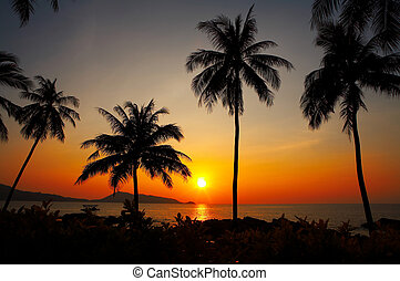 sunset and four - Palms black outlines during sunset on the...