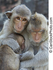 family portrait - portrait of monkey family living in Kala...
