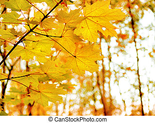 red-haired - yellow autumn leaves of maple