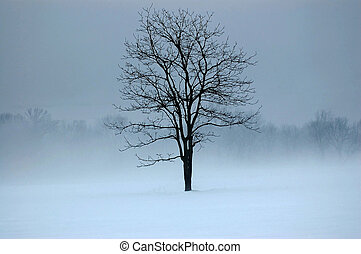 Mystic tree - tree in a field surrounded by fog and snow