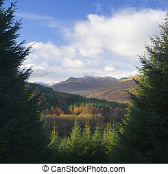 scottish forest - Winter hues on a scottish forested...