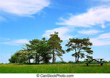 Park - Summer park with group of trees and picnic table