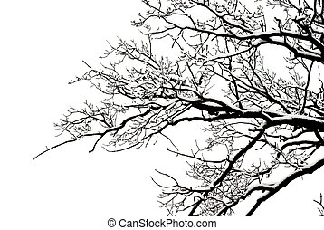 winter tree background frozen, cold, snow, black white...