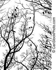 Crows (2) - Crows on tree twig (grayscale isolated on white)
