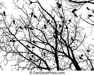 Crows (4) - Crows on tree twig (grayscale isolated on white)
