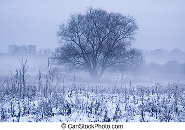 winter fog - winter; white; snow; snowdrift; holiday;...