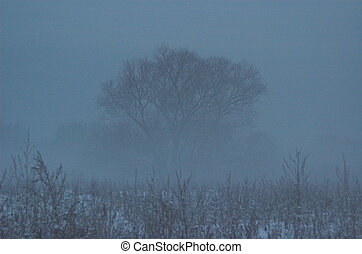 winter fog - winter, white, snow, snowdrift, holiday,...