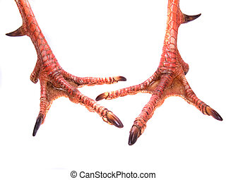 Pair Of Gobbler Feet - Pair of Gobbler male turkey feet,...