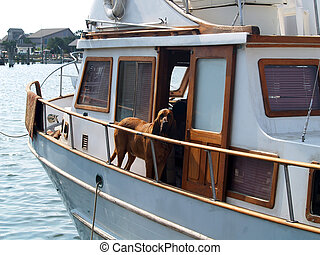 Ahoy Matey - Seafaring canine looking over the railing on an...