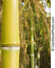 Stalk of a bamboo tree the close plan