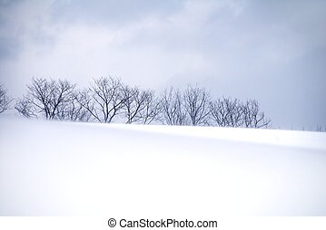 Winter - blanket of snow with row of trees against blue sky...