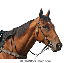 Racehorse - A racehorse taken in the parade ring before a...