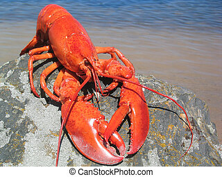 Lobster on a rock