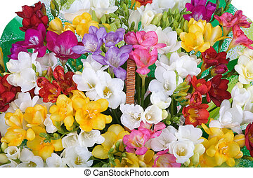 freesia - Colourful motley mixed freesia flowers bouquet in...