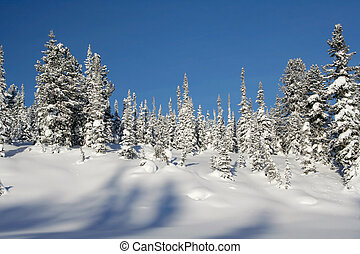 Winter Landscape - winter landscape trees under snow after...