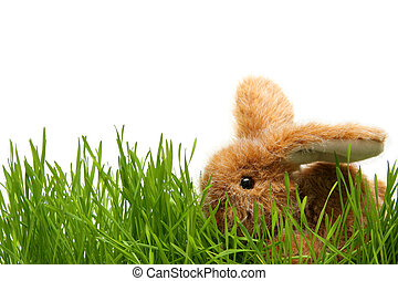 Easter bunny in grass on the white background