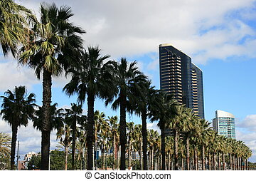 San Diego - Palm trees along Harbour Drive in downtown San...
