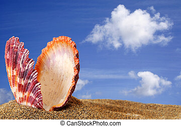 Beach Scallop - Open bivalve seashell on golden sand beach...