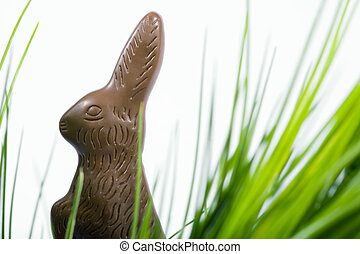 Easter Chocolate - Easter chocolate bunny hidden in grass