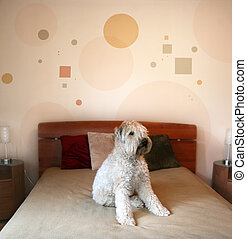 Dog in modern bedroom - Dog sitting on a bed in modern...